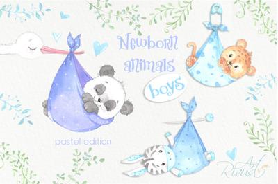 It's a boy Newborn animals clipart PNG download. African Safari clipar