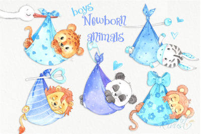 It's a boy Newborn animals clipart PNG download. African Safari clipar