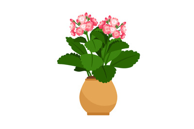 Kalanchoe house plant in flower pot