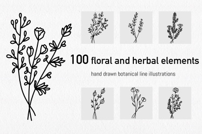 Floral and herbal elements. Hand drawn botanical line illustrations.