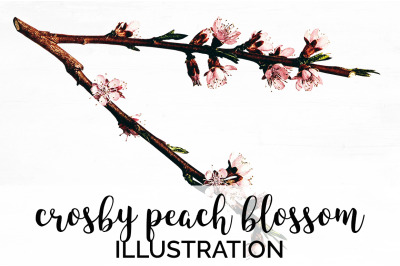 Flowers - Crosby Peach Blossom Vintage Clipart Graphics