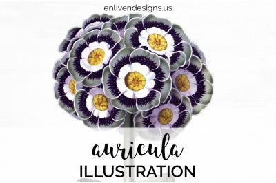 Auricula Flowers Clipart