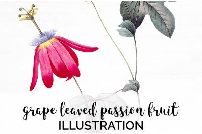 Passion Fruit Clipart