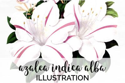 Azalea Clipart