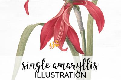 Red Amaryllis Flower Clipart