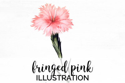 Flowers - Fringed Pink Vintage Clipart Graphics