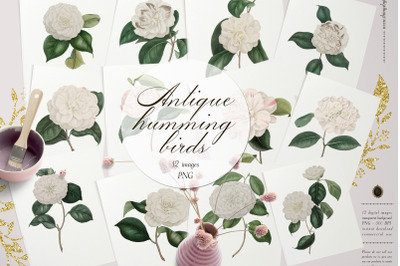 12 Vintage White Camellias Ephemera Transparent Images PNG