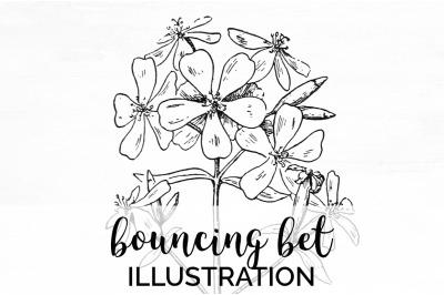 Flowers - Bouncing Bet Vintage Clipart Graphics