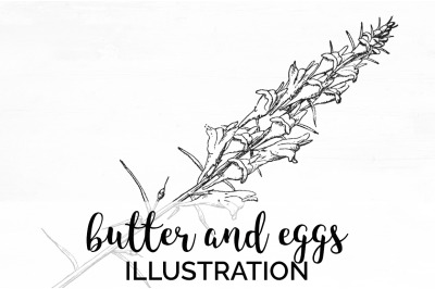 Flowers - Butter and Eggs Vintage Clipart Graphics