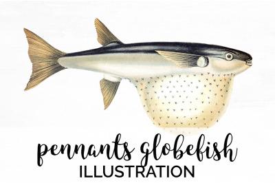 Fish - Pennants Globefish Vintage Clipart Graphics