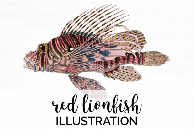 Fish - Red Lionfish Vintage Clipart Graphics