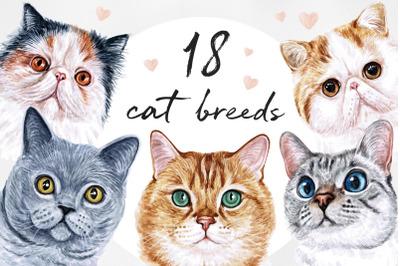 Watercolor set illustrations cat breeds. Cute 18 cats