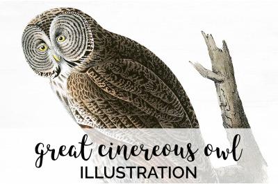 Birds - Great Cinereous Owl Vintage Clipart Graphics