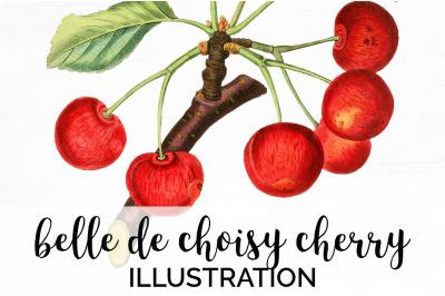 Cherry Fruit Clipart Cherries