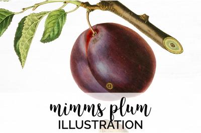 Plum Fruit Clipart