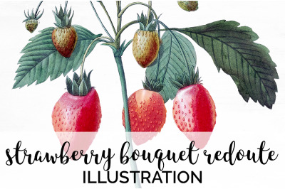 Strawberry Fruit Clipart