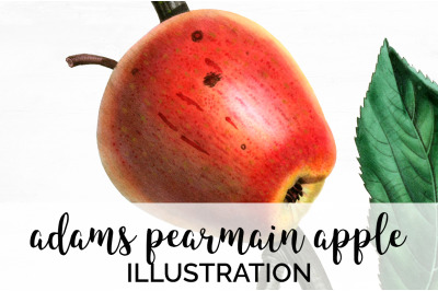 Apple Fruit Clipart