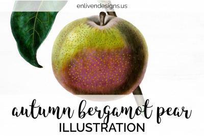 Pear Fruit Clipart