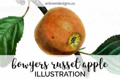 Apple Fruit Clipart