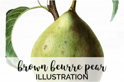 Fruit - Brown Beurre Pear Vintage Clipart Graphics