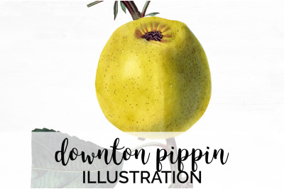 Fruit - Downton Pippin Vintage Clipart Graphics