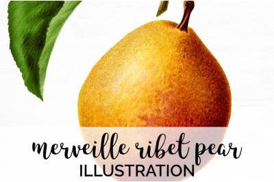 Fruit - Merveille Ribet Pear Vintage Clipart Graphics