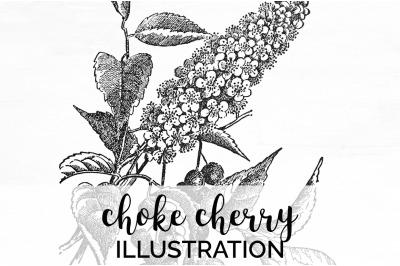 Floral - Choke Cherry Vintage Clipart Graphics