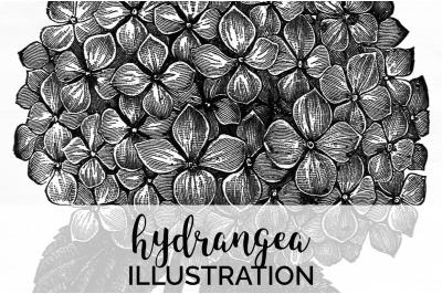 Floral - Hydrangea Vintage Clipart Graphics