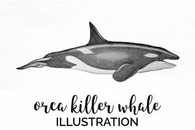 Orca Killer Whale Vintage Clipart Graphics