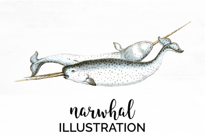 Narwhal Vintage Clipart Graphics