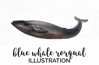 Blue Whale Rorqual Vintage Clipart Graphics