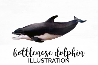 Bottlenose Dolphin Vintage Clipart Graphics
