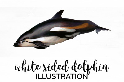 White sided Dolphin Vintage Clipart Graphics