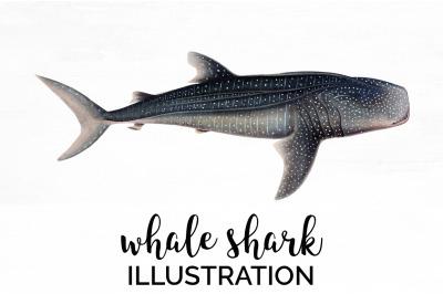 Sharks - Whale Shark Vintage Clipart Graphics
