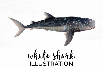 Whale Shark Clipart