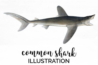 Shark Clipart Common Shark