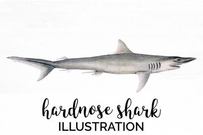 Shark Clipart Hardnose Shark