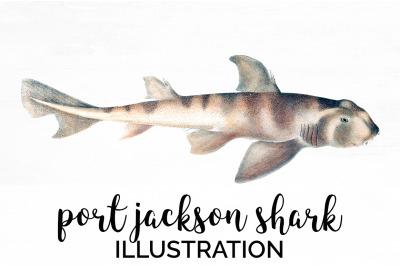 Shark Clipart Port Jackson Shark