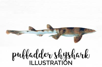 Shark Clipart Puffadder Shyshark Shark