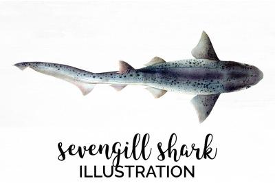 Sharks - Sevengill Shark Vintage Clipart Graphics