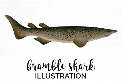 Sharks - Bramble Shark Vintage Clipart Graphics