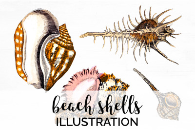 Shells Clipart - Beach Shells Vintage