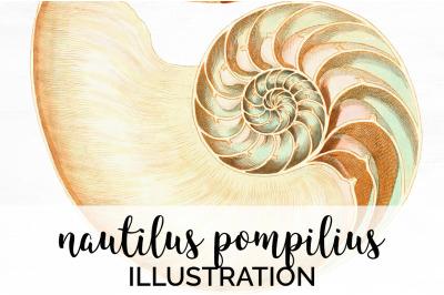 Shells - Nautilus Pompilius Vintage Clipart Graphics
