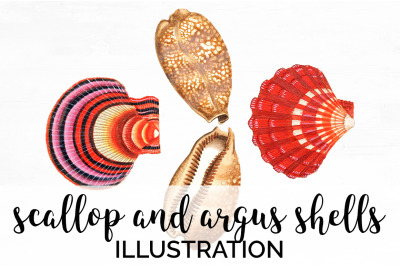 Shells - Scallop and Argus Shells Vintage Clipart Graphics