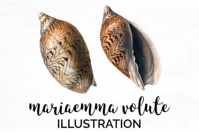 Shells Clipart