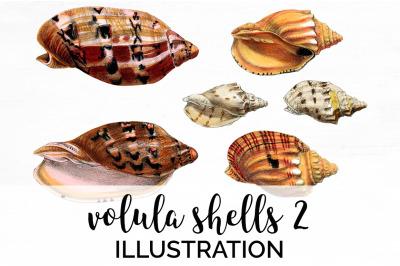 Shells - Volula Shells 2 Vintage Clipart Graphics