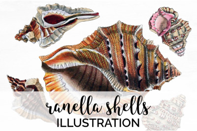 Shells Clipart - Ranella Shells Vintage