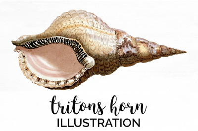 Shell Clipart - Tritons Horn Vintage