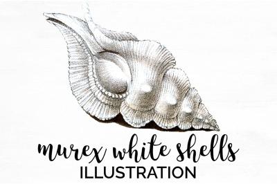 Shells Clipart - Murex White Shells Vintage