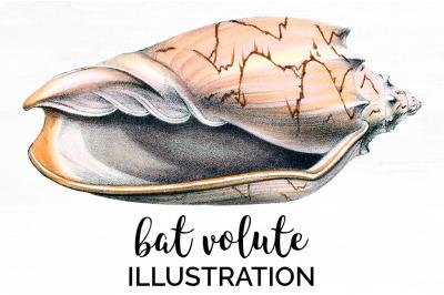 Shells - Bat Volute Vintage Clipart Graphics